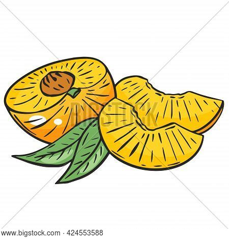 Sliced Peach, Vector. Peach Half And Wedges. Bright Orange Juicy Fruit With Leaves. Organic Healthy