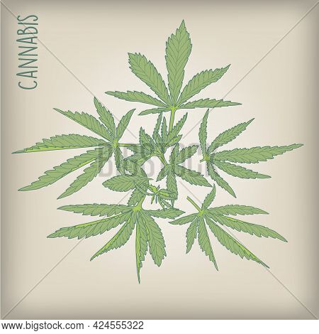 Hand-drawn Hemp. Sketch Of Cannabis Leaves And Marijuana Bud Set Of Vector Illustrations.