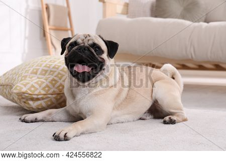 Cute Funny Fawn Pug On Floor At Home