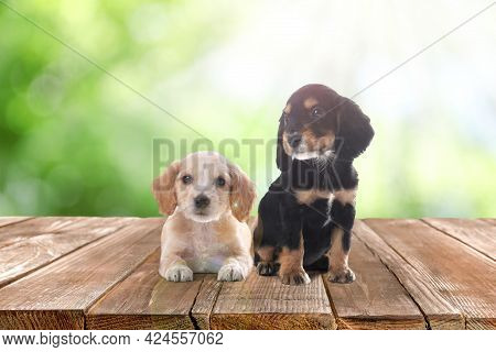 Cute English Cocker Spaniel Puppies On Wooden Surface Outdoors, Bokeh Effect. Adorable Pets