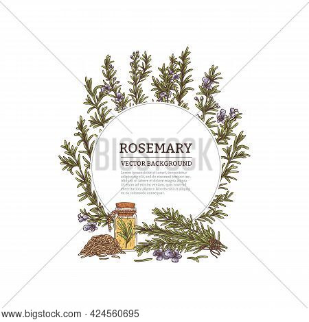 Background Or Label With Fresh Rosemary Sprigs, Engraved Vector Illustration.
