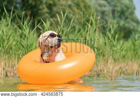 A Dog In Sunglasses And An Inflatable Ring Sits On The Bank Of The River. Funny Summer Photo With A