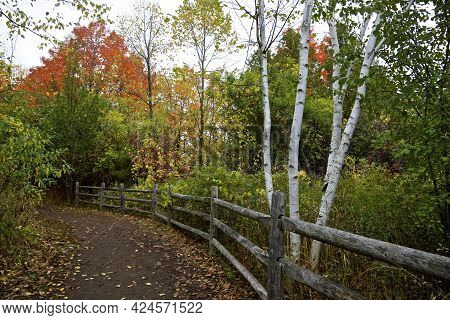 Rouge National Urban Park - Footpath With Fences In Autumn