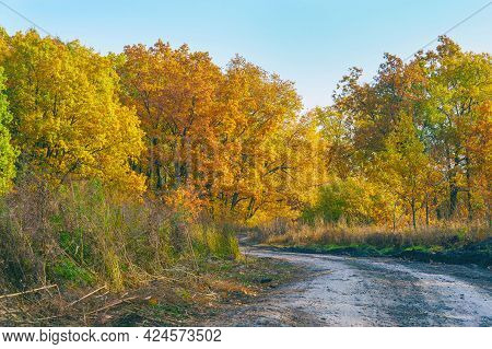 Country Forest Road In Front Of A Beautiful Lush Autumn Forest With Bright Yellow And Orange Leaves.