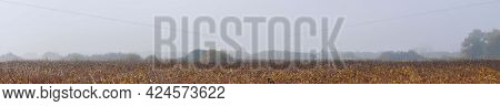 Panorama Autumn Fog Over A Meadow With Dry Withered Grass. Autumn Landscape