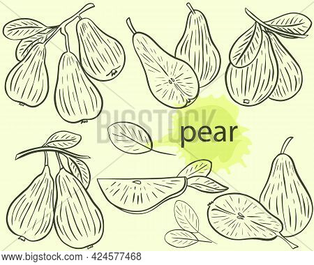 Pear Sketch Set, Vector. Fruits On A Branch, Whole And Pieces. Collection Of Pears, Hand Drawing. En