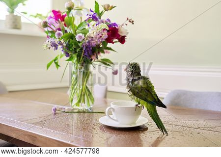 Wet Green Parrot Bathing In Cup, Bird Enjoying Bath, Pet Quaker Parrot On Table