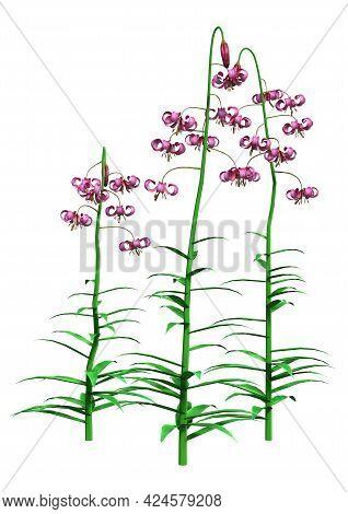 3D Rendering Lilium Martagon Flowers On White