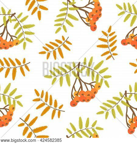 Autumn Background With Rowanberry. Seamless Pattern Floral. Vector