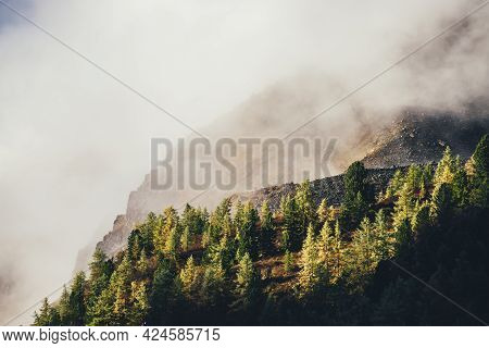 Beautiful Autumn Landscape With Yellow Larches On Mountain With View To Sunlit Golden Rock In Dense