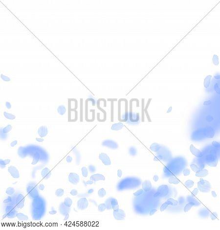 Dark Blue Flower Petals Falling Down. Delicate Romantic Flowers Falling Rain. Flying Petal On White