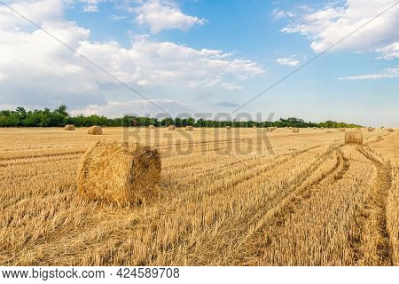 Scenic View Of Many Rolled Hay Bales On Harvested Golden Wheat Field At Countryside Against Blue Sky