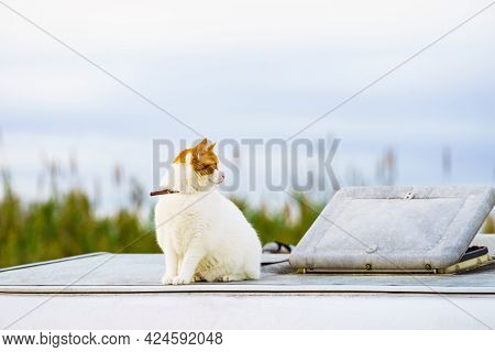 White Cat On Roof Of Camper Vehicle. Motorhome Traveling With Pet.