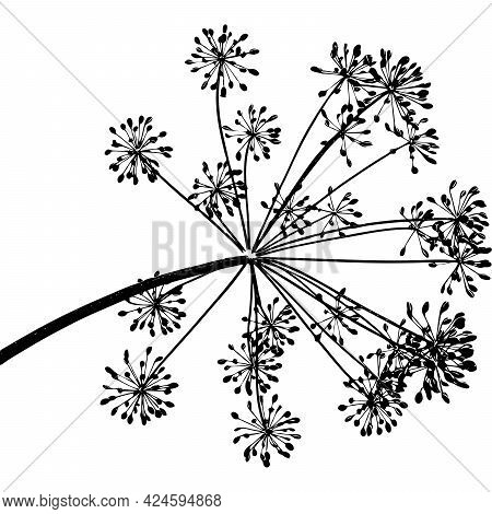 One Black Branch Of Dill Seeds Is On A White Background, Vector Illustration