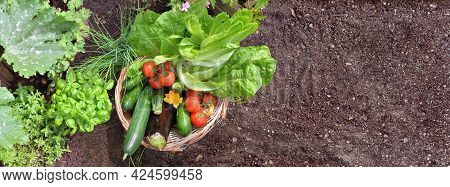 Top View On  Basket Filled With Colorful Fresh Vegetables In The Garden With Empty Space Of Dirt