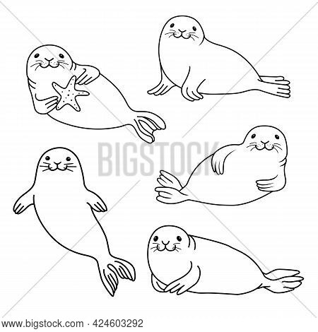 Set Of Fur Seals. Vector Hand Drawn Fur Seal Black Outline Isolated On White Background. Ocean Anima
