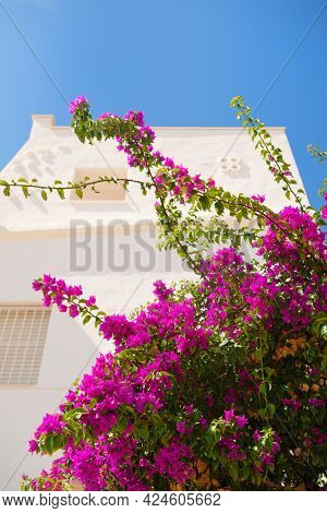 Purple bougainvillea against white house in Spain