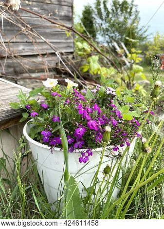 Flowers In A Pot Standing In Green Grass