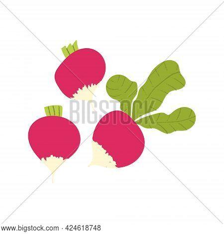 Radish Flat Hand Drawn Set. Crunchy Fresh Vegetable With Textured Details.