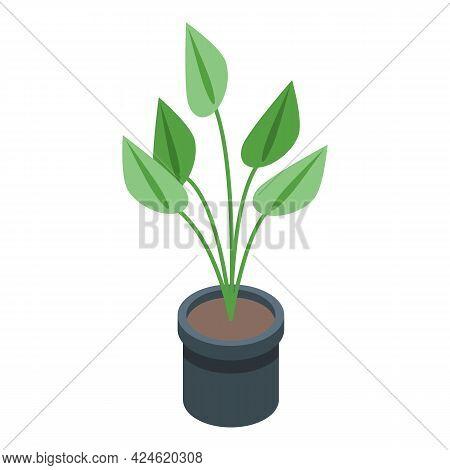 Plant Pot Icon Isometric Vector. Flowerpot Vase. Garden Or Room Plant