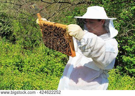 Bee, Honey, Honeybee, Beekeeper, Keeper, Keeping, Worker, Brood, Cells, Nest, Capped, Uncapped, Expo