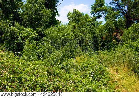 Lush Green Deciduous Plants And Trees At A Rural Preserve Taken In The North American Deciduous Fore