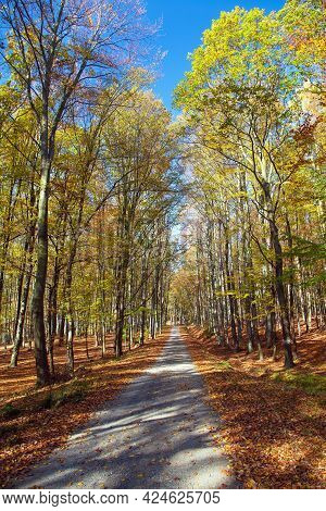 Autumn Forest Road In Deciduous Beech Forest, Chriby, Czech Republic