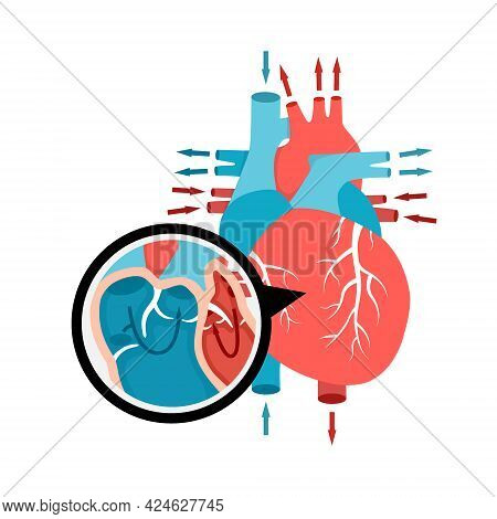 Close-up Blood Circulation In The Heart. Human Heart Anatomy With Blood Flow. Human Internal Organ I