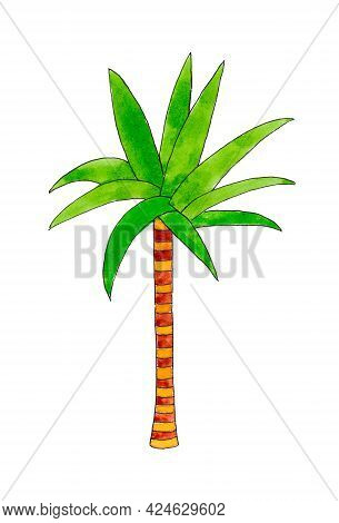 Palm Tree Isolated On White Background. Outlined Outline. The Illustration Is Drawn With Watercolor