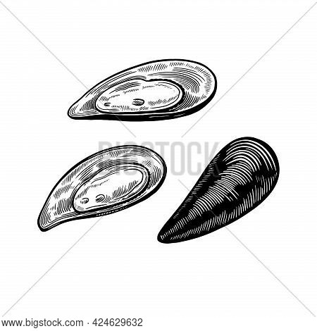 Set Of Mussels Shells Isolated On White Background In Vintage Sketch Engraving Style. Hand Drawn Sea