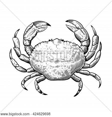 Black And White Line Illustration Of Crab In Sketch Engraving Vintage Style For Menu And Label Desig