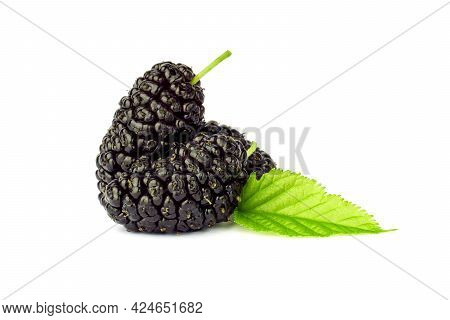 Mulberry Berry With Leaves Isolated On White Background. Black Mulberry