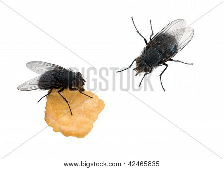Flies Isolated Over White - One Eating