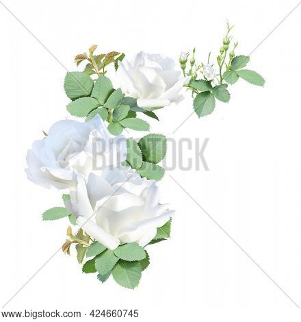 Angle border with branch of rose with white flowers. Angle frame with branches of Climbing Rose. Isolated on white background