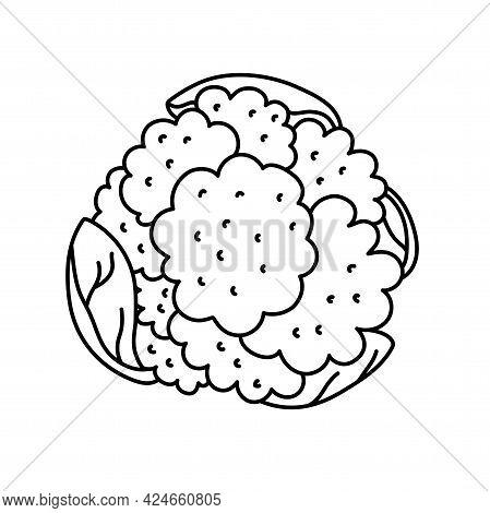 Cauliflower. Vegetable Sketch. Thin Simple Outline Icon. Black Contour Line Vector. Doodle Hand Draw