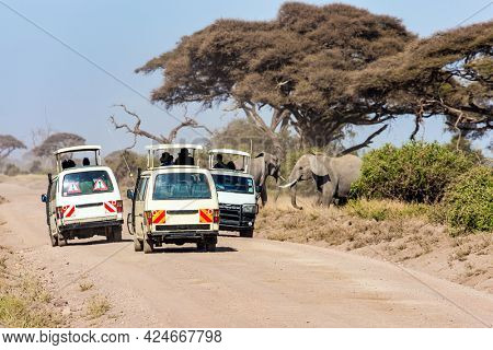 Wild animals are freely available. Herd of wild elephants grazes at the foot of Mount Kilimanjaro. Magical journey to Africa. Kenya. Amboseli. Car adventure for avid tourists