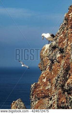 Seagull Looking Down On A Rocky Cliff Covered In Moss At Cies Island With The Atlantic Ocean On Back