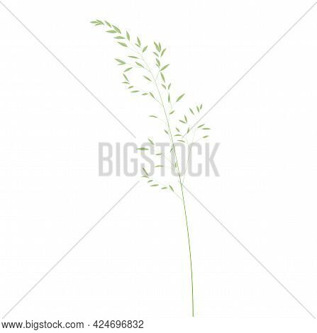 Wild Grass Shoots Vector Stock Illustration. Fresh Green Young Grass. Panicle. Template For A Weddin