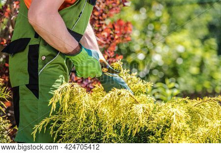 Summer Time Garden Plants Trimming. Caucasian Gardener Trim Backyard Garden Tree Branches Close Up P