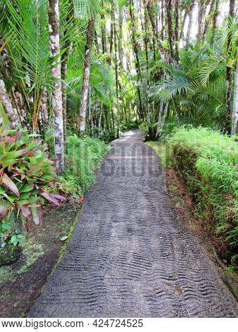Paved Path In Tropical Garden With Lush Vegetation Of The French West Indies. Path In Lush Caribbean