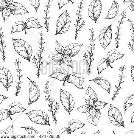 Basil And Thyme Seamless Pattern Vector Design