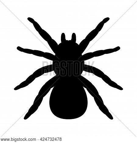 Tarantula Spider Silhouette. Vector Illustration Isolated On White Background, Logo Tarantula Spider