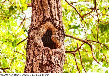 The Hole In The Tree House For Small Wildlife Animal. Tree Hollow Over Blur Green Leaf Background
