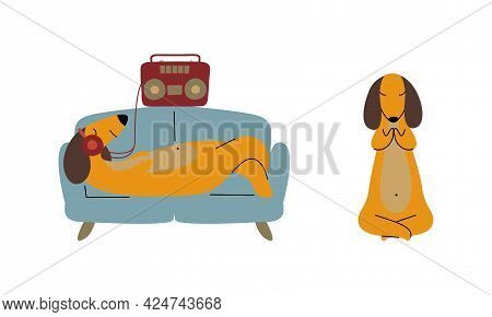Comic Brown Dachshund Dog Lounging On Sofa Listening To Music With Earphones And Sitting In Lotus Yo