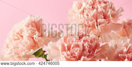 Bouquet Of Pink Carnations. Design Concept Of Holiday Greeting With Carnation Bouquet On Pink Backgr