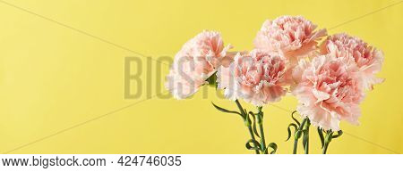 Bouquet Of Pink Carnations. Design Concept Of Holiday Greeting With Carnation Bouquet On Yellow Back