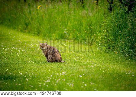 Cat Sitting In Green Field. One Tabby Cat Looking In Sunny Day. Lausanne, Switzerland. Cute Pet.