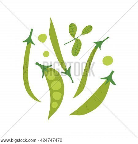 Green Peas And Beans With Basil Leaf. Flat Hand Drawn Organic Vegetable Mix.