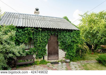 A Small Country House. Wall And Window Overgrown With Wild Grapes, Green Foliage, Cottage, Summer.