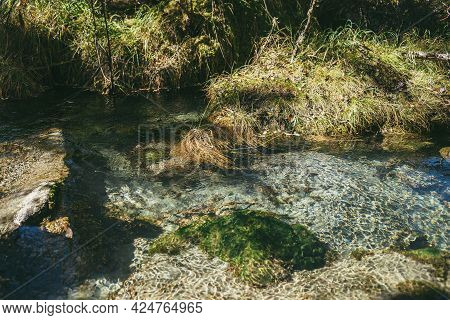 Colorful Autumn Landscape With Clear Water Of Mountain Brook With Underwater Moss Among Grass In Sun